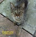 becauseofbentley - charity reviews, charity ratings, best charities, best nonprofits, search nonprofits