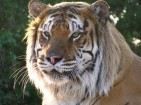 INTERNATIONAL EXOTIC FELINE SANCTUARY INC - charity reviews, charity ratings, best charities, best nonprofits, search nonprofits