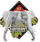 International Elephant Foundation - charity reviews, charity ratings, best charities, best nonprofits, search nonprofits