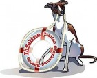 LIFELINE ITALIAN GREYHOUND RESCUE INC - charity reviews, charity ratings, best charities, best nonprofits, search nonprofits
