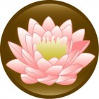 Lotus Outreach - charity reviews, charity ratings, best charities, best nonprofits, search nonprofits