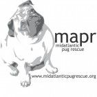 MID-ATLANTIC PUG RESCUE  - charity reviews, charity ratings, best charities, best nonprofits, search nonprofits
