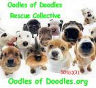 Oodles of Doodles Inc - charity reviews, charity ratings, best charities, best nonprofits, search nonprofits