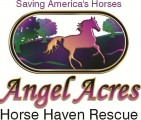 Angel Acres Horse Haven Rescue, Inc. - charity reviews, charity ratings, best charities, best nonprofits, search nonprofits