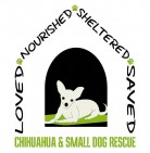 Chihuahua & Small Dog Rescue Inc - charity reviews, charity ratings, best charities, best nonprofits, search nonprofits