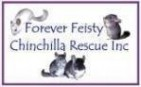 Forever Feisty Chinchilla Rescue Inc - charity reviews, charity ratings, best charities, best nonprofits, search nonprofits
