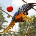 FLORIDA EXOTIC BIRD SANCTUARY INC - charity reviews, charity ratings, best charities, best nonprofits, search nonprofits