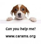 Community Animal Rescue & Adoption - charity reviews, charity ratings, best charities, best nonprofits, search nonprofits