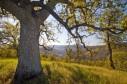 Latest Photo by Conservation Lands Foundation