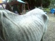 """Latest Photo by Healing Horses """"One child at a time"""" Inc."""