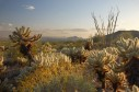 Latest Photo by McDowell Sonoran Land Conservancy