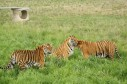 Latest Photo by The Wild Animal Sanctuary