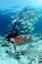 Latest Photo by Sea Turtle Restoration Project