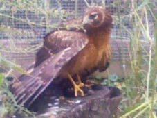 Latest Photo by SKYES SPIRIT WILDLIFE REHABILITATION CENTER