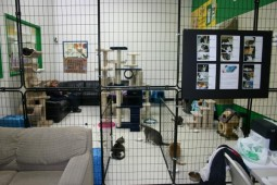 Latest Photo by LONG ISLAND FELINE ADOPTION CENTER INC