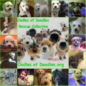 Latest Photo by Oodles of Doodles Inc
