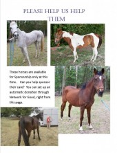 Latest Photo by Changing Fates Equine Rescue of Delware, Inc.