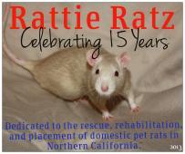 Latest Photo by Rattie Ratz