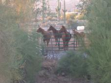 Latest Photo by Apache Junction Horse Rescue Corporation