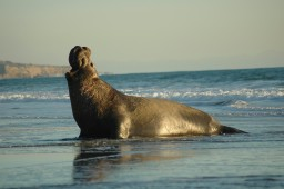 Latest Photo by MARINE MAMMAL CENTER