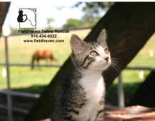 Latest Photo by FIELDHAVEN FELINE RESCUE INC