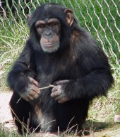 Latest Photo by Primate Rescue Center