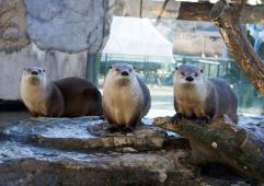 Latest Photo by The Living Planet Aquarium
