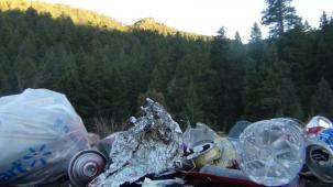 Latest Photo by The Tree Huggers Inc.