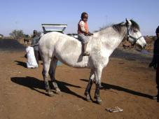 Latest Photo by Highveld Horse Care Unit (SA)