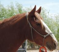 Latest Photo by Miracle Horse Rescue, Inc.
