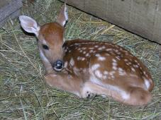 Latest Photo by MYSTIC FARM WILDLIFE RESCUE INC