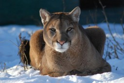 Latest Photo by THE WILDCAT SANCTUARY