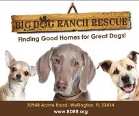 Latest Photo by BIG DOG RANCH RESCUE INC