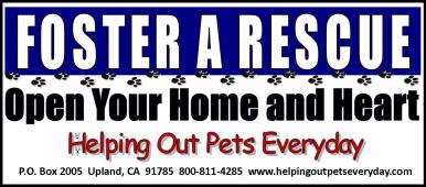 Latest Photo by Helping Out Pets Everyday