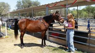 Latest Photo by SAFE HAVEN HORSE RESCUE & SANCTUARY