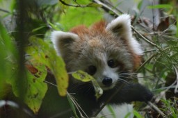 Latest Photo by RED PANDA NETWORK
