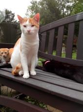 Latest Photo by ASLANS CATS INC