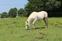 Latest Photo by HORSE PROTECTION SOCIETY OF NORTH CAROLINA