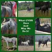 Latest Photo by CENTRAL VIRGINIA HORSE RESCUE