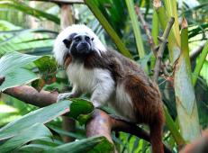 Latest Photo by Pacific Primate Sanctuary, Inc.