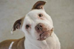 Latest Photo by HUMANE SOCIETY OF MIDDLETOWN INC