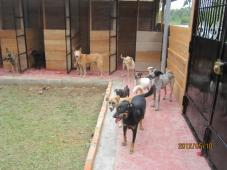 Latest Photo by Amazon CARES - Community Animal Rescue, Education and Safety