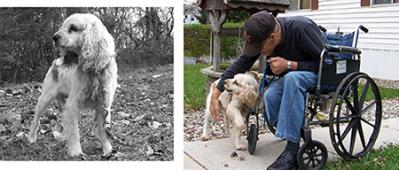 Latest Photo by Dogs Deserve Better, Inc.