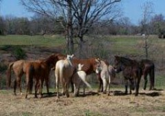 Latest Photo by GIVE ME A CHANCE EQUINE RESCUE