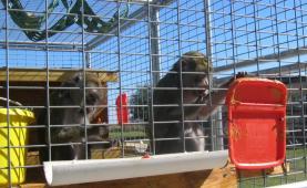 Latest Photo by RETIREMENT SANCTUARY FOR LABORATORY ANIMALS INC
