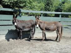 Latest Photo by EQUINE AID