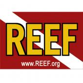 Latest Photo by Reef Environmental Education Foundation, Inc.