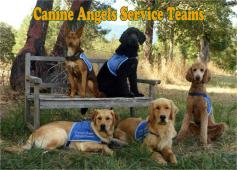 Latest Photo by Canine Angels Service Teams