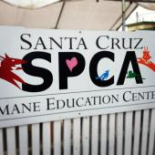 Latest Photo by SANTA CRUZ SPCA AND HUMANE SOCIETY