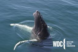 Latest Photo by WHALE AND DOLPHIN CONSERVATION -NORTH AMERICA-INC